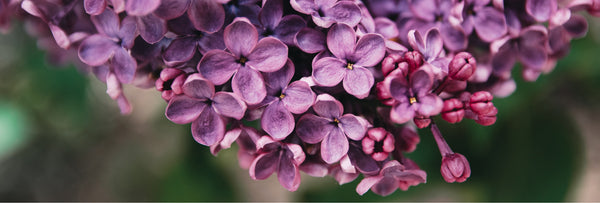 The meaning of purple flowers