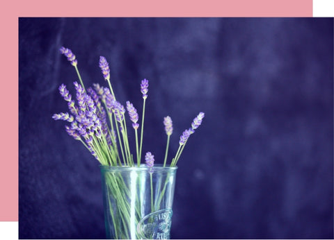 Lavender flowers against a purple background