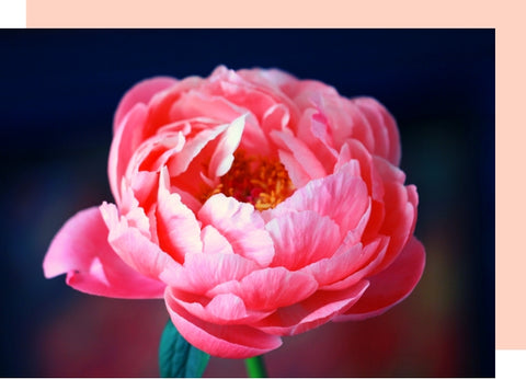 Floriography - the meaning of flowers – Floraly