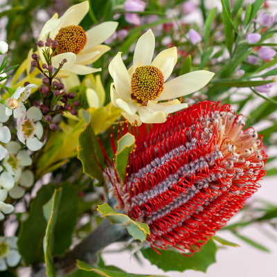 Close up of a protea with leucadendrons in the background