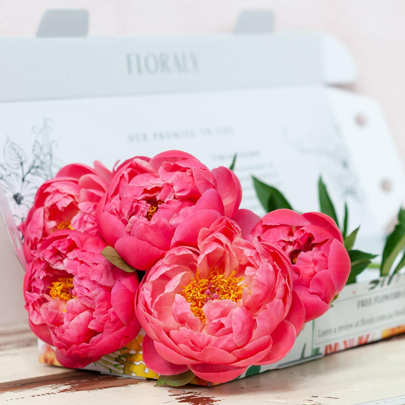 Bunch of coral peonies in a Floraly box