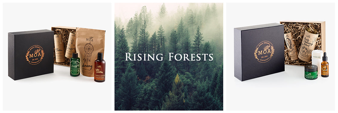 Rising Forest Offer