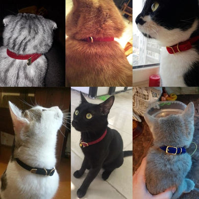 Adjustable Cat Collar - theprimelabel