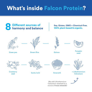Falcon Protein - Plant-Based Protein Powder 1.38 lb (Vegan), 21 Servings, Vanilla Flavor