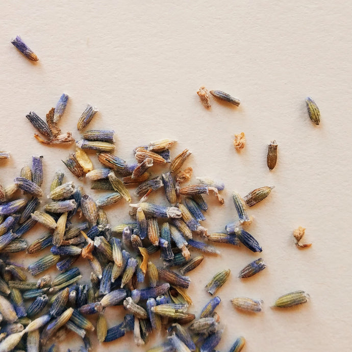 Lavender: An Herb for Tension