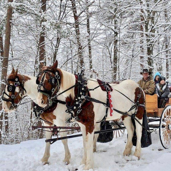 Daffodil Hill Carriage Rides