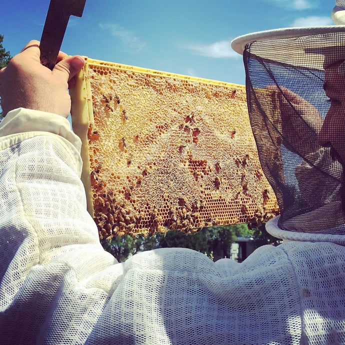 Hobby Farms - Astor Apiaries: Leading The Urban Beekeeping Movement
