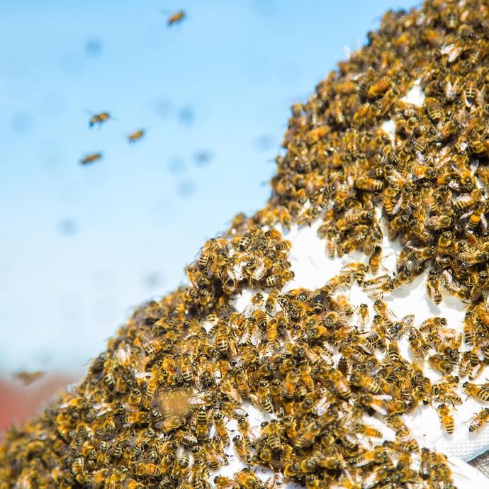 It's Swarm Season, But Don't Be Alarmed