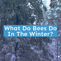 What Do Bees Do In The Winter?