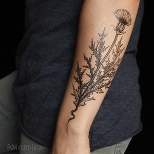 Purple Thistle Flower Temporary Tattoo - Astor Apiaries