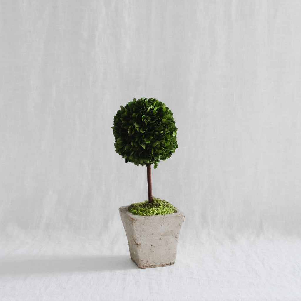 Boxwood Topiary - Square, Small