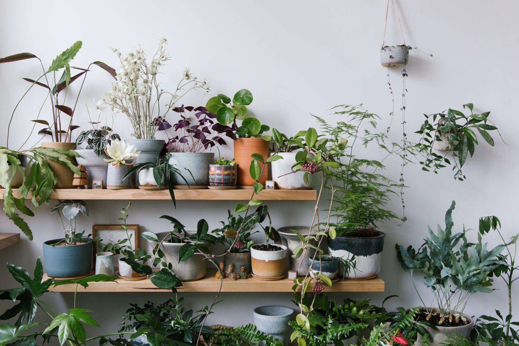 Leaf and Thread Melbourne studio full of handmade ceramic pots for indoor plants