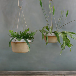 Desert Brass Hanging Planter