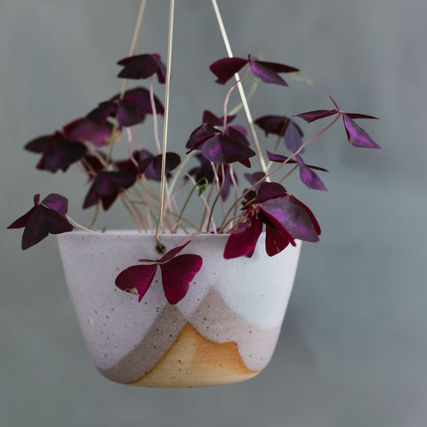 Misty Morning Brass Hanging Planter