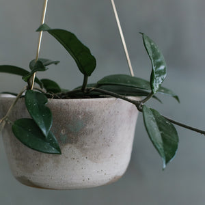Moss Green Brass Hanging Planter