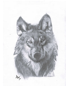 EIGHTY DOLLAR ORIGINAL Wolf
