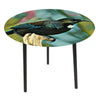 Glass top side tables-Tui - WORLD OF DECOR