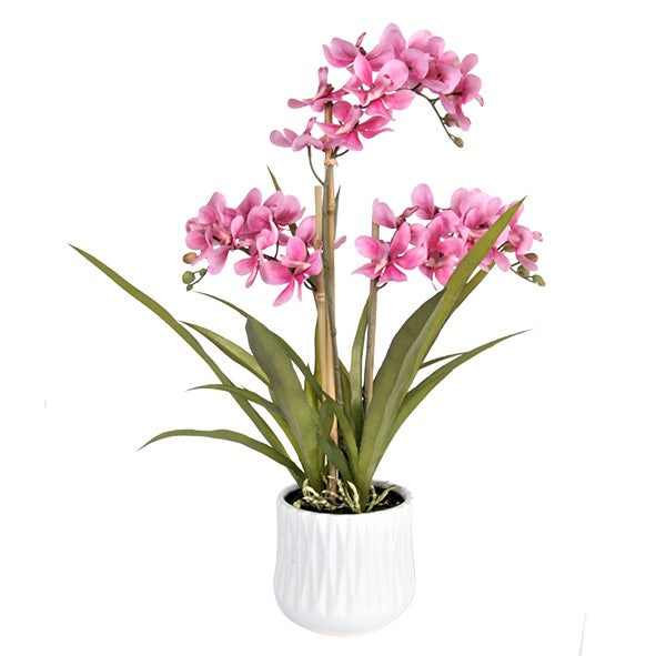 Singapore orchid 3 stem 3 sets lvs in white ceramic pot - WORLD OF DECOR