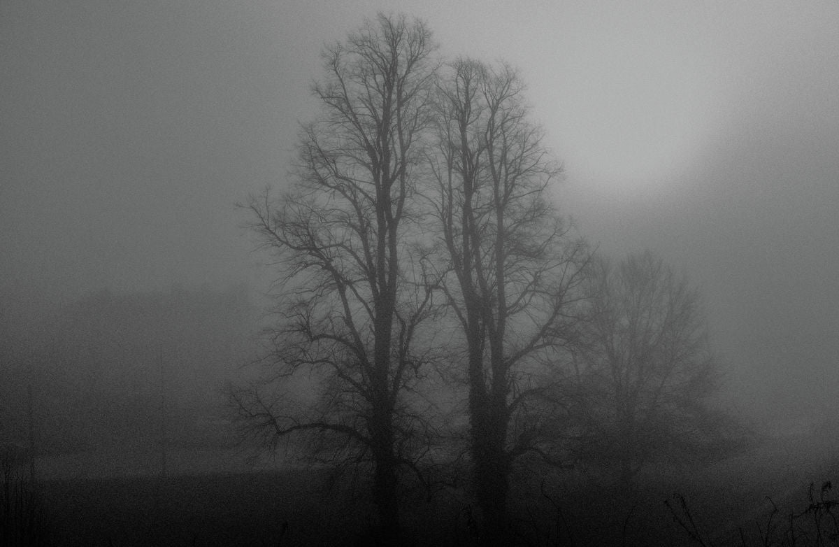 Misty Trees, Tunbridge Wells
