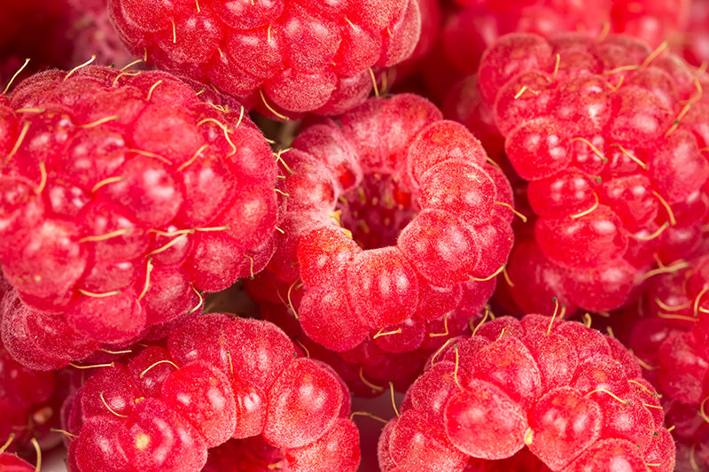 Developed from Raspberries and designed to fight inflammation, our Miracle Berry Stem Cells offer double benefits by soothing the skin and contributing to the prevention of skin aging.