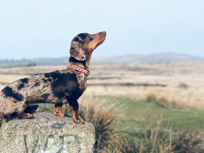 How Your Confidence Impacts on Your Dog's Confidence