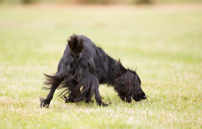 Your Dog's Secret Superpower