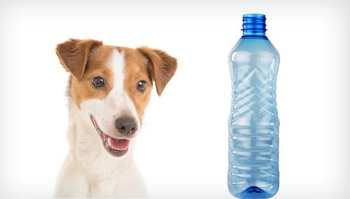 Are you Giving Cancer Causing Plastics to your Dog?