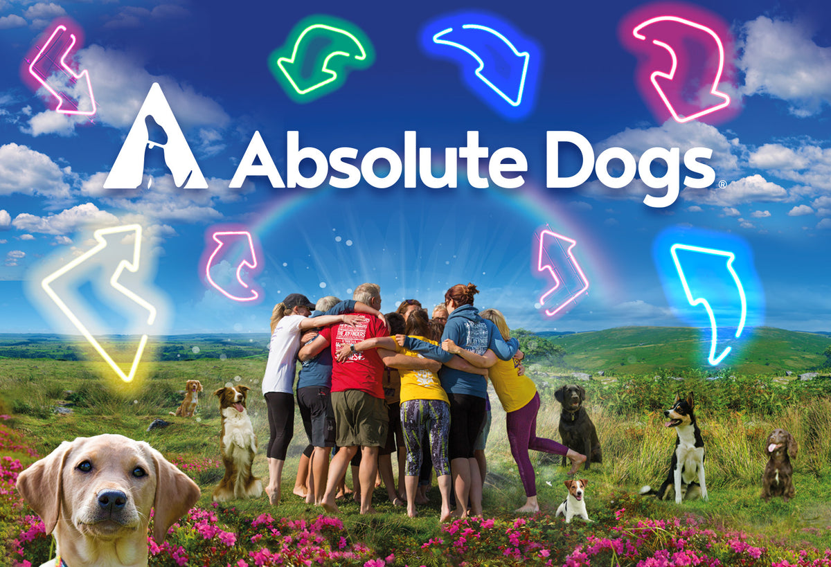 absoluteDogs | Inspirational, Fun and Innovative Games Based