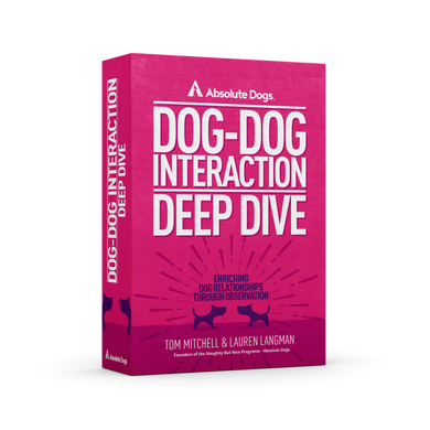 Dog-Dog Deep Dive