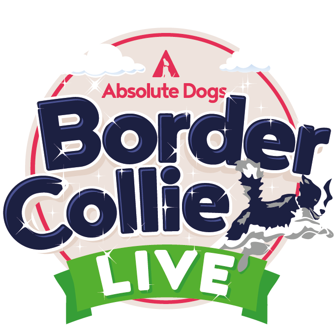 Border Collie Live