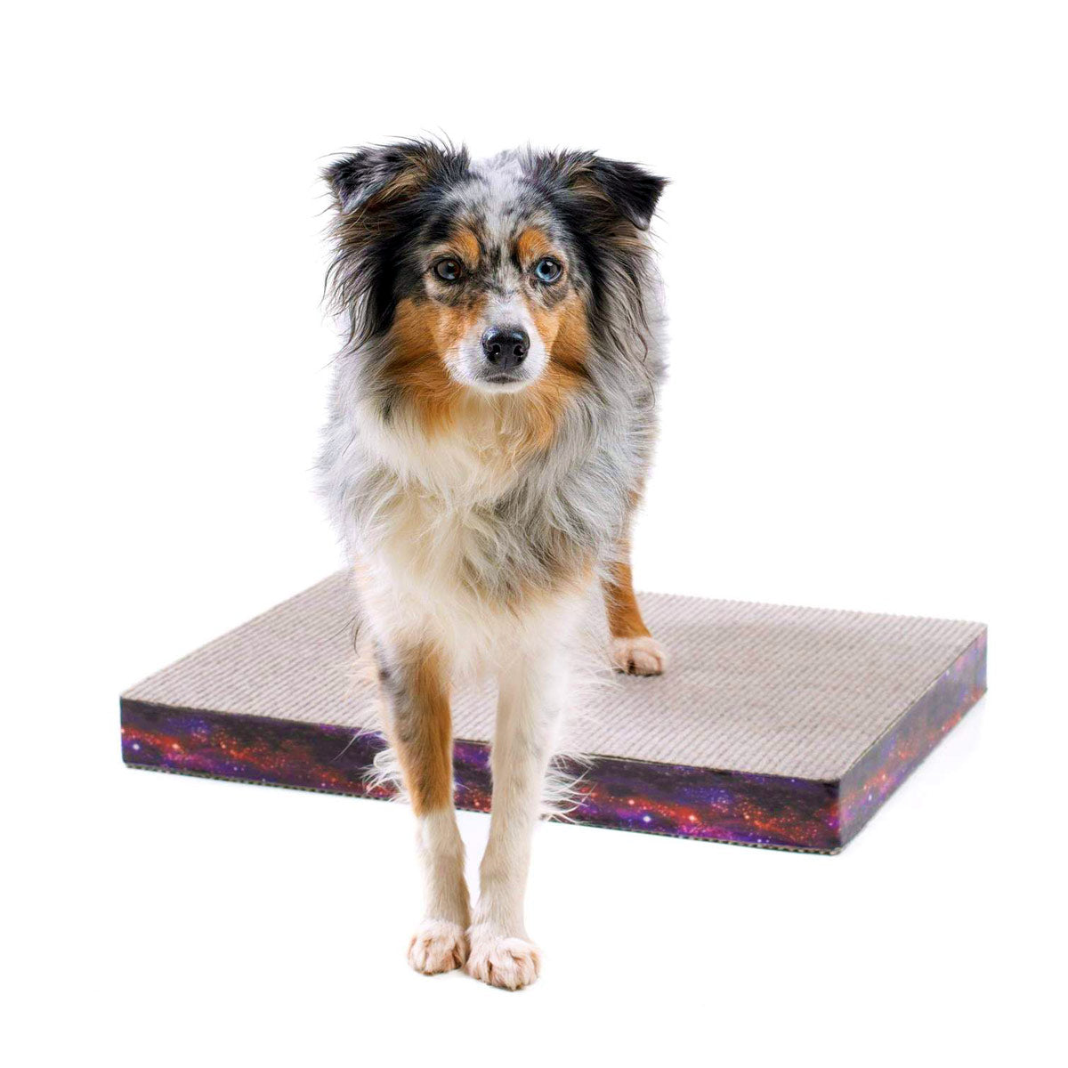 Absolute Dogs Training Platforms