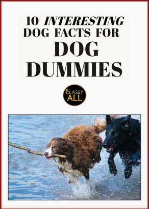 10 Interesting Dog Facts For Dog Dummies