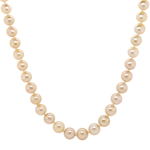 Golden south sea's necklace 9.1-11.6mm - Duffs Jewellers