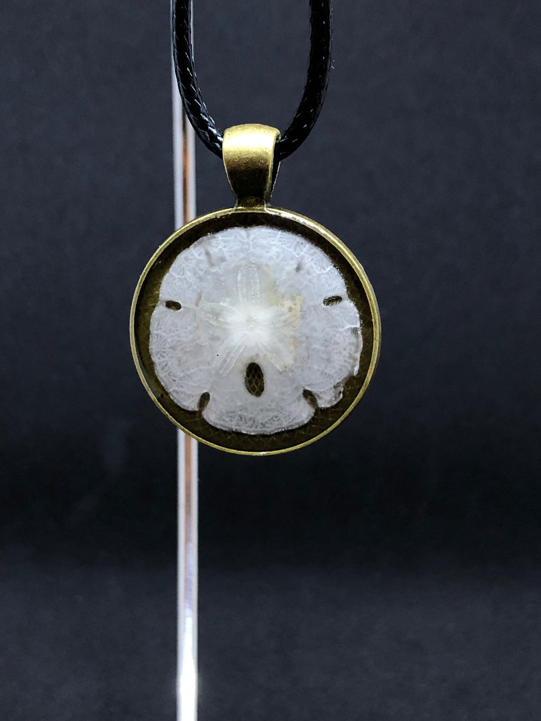 Sand Dollar / Antique Gold Pendant - Black Cord Necklace