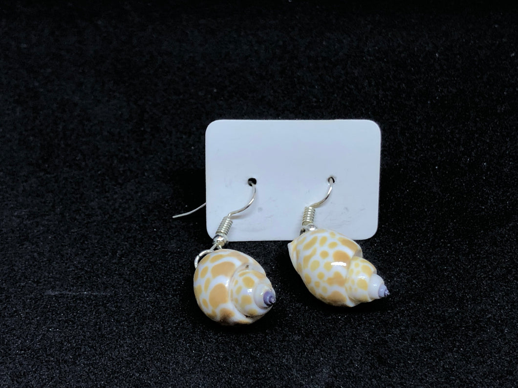 Seashell / Wire Hook Earrings