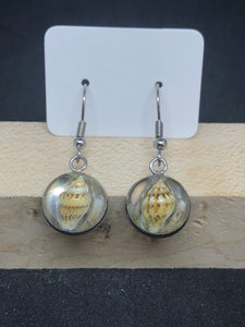 Seashell / Silver Wire Hook Earrings