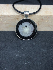 Sand Dollar w/ Black Sand / Silver Pendant - Black Cord Necklace