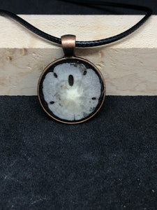 Sand Dollar / Antique Bronze Pendant - Black Cord Necklace