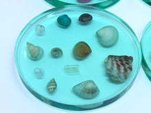 Load image into Gallery viewer, Small Round Coasters with Seashells