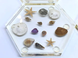 Large Hexagon Coasters with Seashells