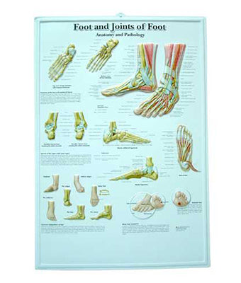 Foot & Joints of Foot Medical Chart - Tredan Connections