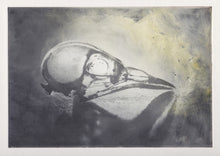 Load image into Gallery viewer, Found Bird Skull Print