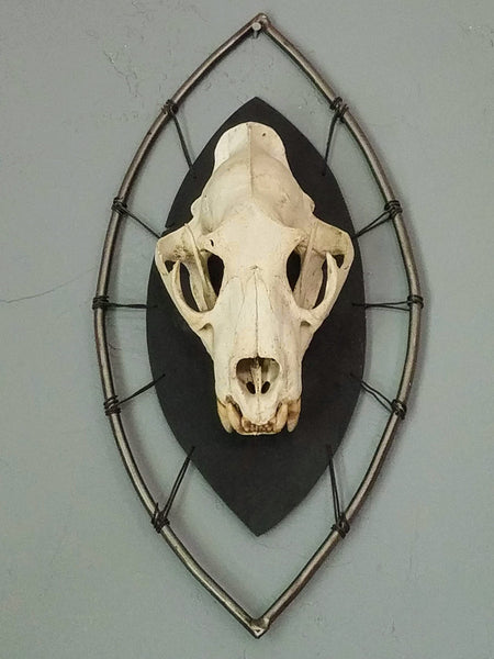 African Leopard Skull on African Shield Mount
