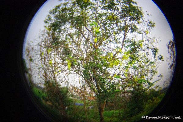 Holga Fisheye Lens for Digital Mirrorless Cameras - FEL-HLW