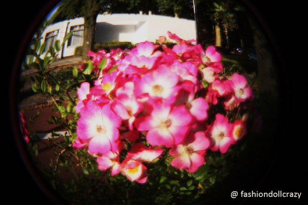 Digital Holga Fisheye Kit - Sample Image (2)