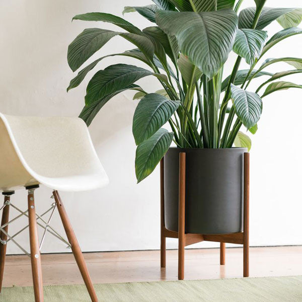Case Study Large Cylinder Planter w/ Wood Stand