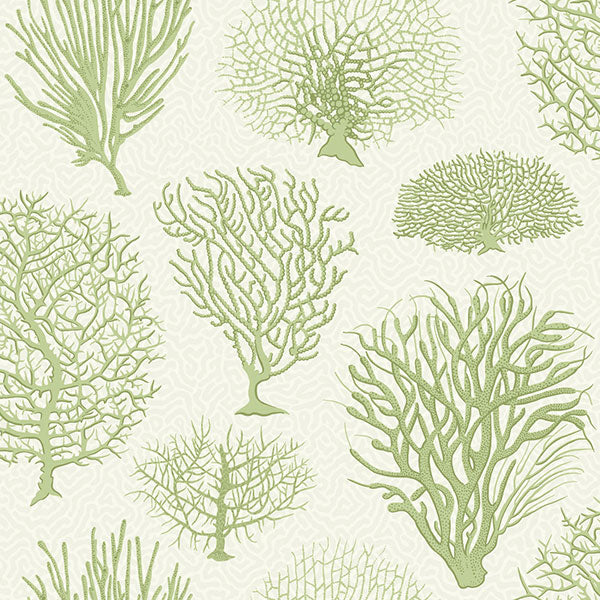Cole & Son Wallpaper - Curio - Seafern in Soft Green