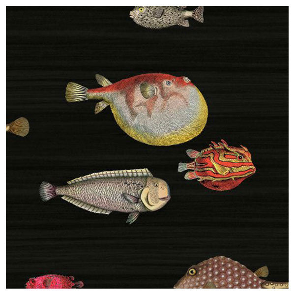 Cole & Son - Fornasetti II Acquario Wallpaper - Black / Multi - Vertigo Home
