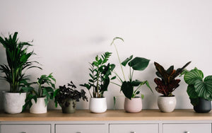 Easy to Maintain House Plants to Spruce Up Your Home