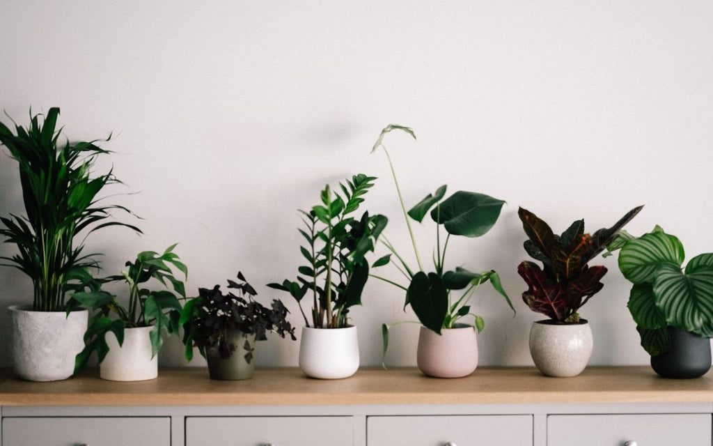Easy plants for your home